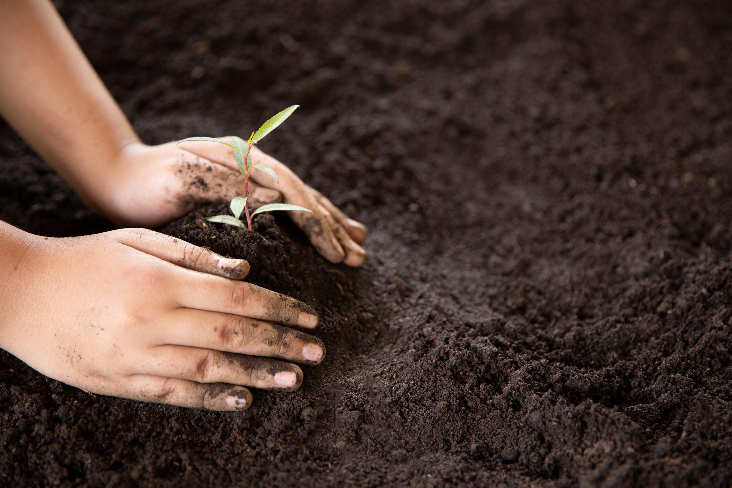 Dia da Terra: 6 maneiras de incentivar a sustentabilidade
